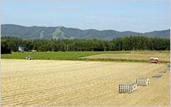 端端野町の広大なタマネギ畑