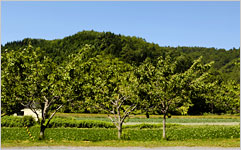 壮瞥町の果樹園