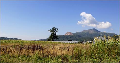 壮瞥町のトウモロコシ畑