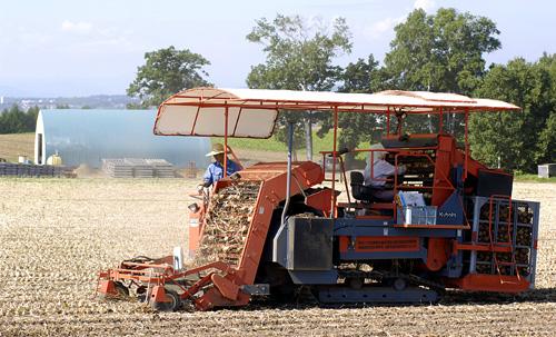 トラクターでタマネギの収穫を行う